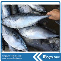 Hot sale Frozen Whole Round Bonito fish (Auxis Tazar)