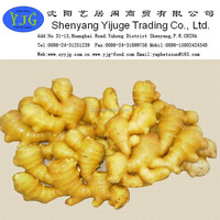 YJG 2014 chinese fresh ginger, air dry ginger high quality best price shandong Factory directly