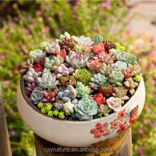 Real touch mini cactus succulent plants decoration
