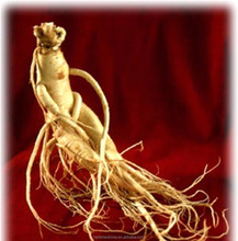 Ginseng farm directly supply in China