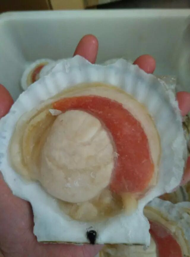 Cheap 88% moisture High quality IQF frozen half shell Scallop