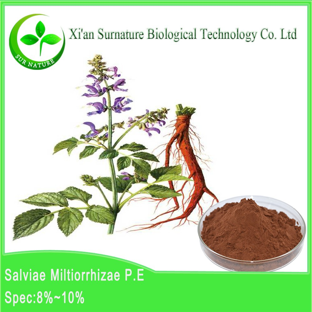 Manufacturer Supplier organic Dan shen root extract wholesale