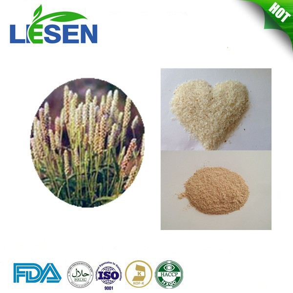 Hot Products Psyllium Seed Husks Powder 98% without Any Side-effect
