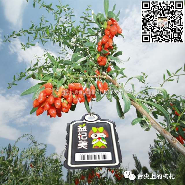 professional farms goji--2015 new crop