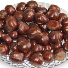 wholesale price fresh hebei zunhua chestnut