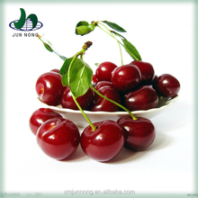 New arrival organic fresh canned red cherry