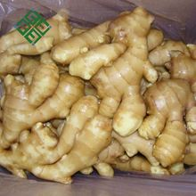 Best Quality Ginger price of fresh ginger