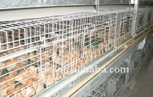 9LCDy-series H-type Multi-tier Pullet Chicken Rearing Cage