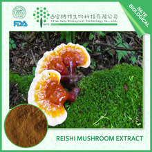 bodybuilding supplements natural reishi triterpenes reishi mushroom powder extract reishi powder 20:1