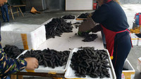 Price of dried sea cucumber
