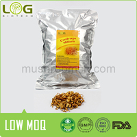 Pure Medical Mushroom Cordyceps militaris