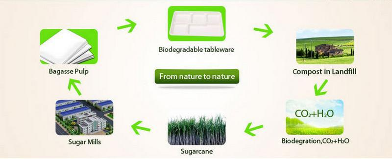 Disposable Biodegradable Fish Container