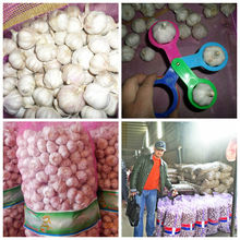low chinese white garlic price(4.5cm,5cm,5.5cm,6cm)