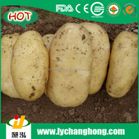 2016 Holland Potatoes With Lowest Price