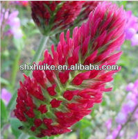 red clover extract formononetin 485-72-3/red clover extract :formononetin
