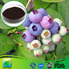 Manufacturer Supply Natural Mountain Cranberry Extract with High Quality