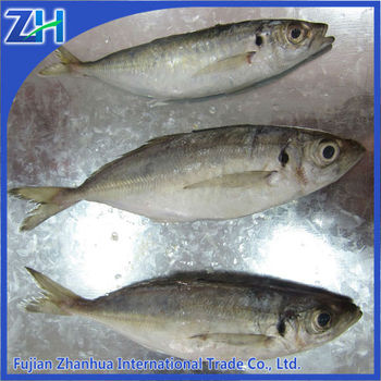 Frozen Horse Mackerel fish price hot sale
