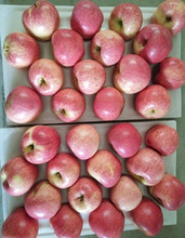 2015 new crop fresh red qinguan apple for sale
