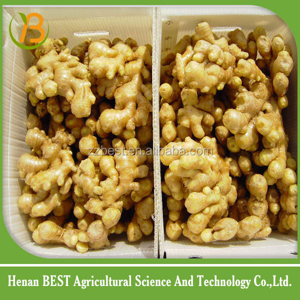 2016 new crop chinese mature ginger market price/with factory price of fresh ginger