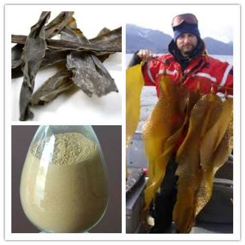 Best Selling Kelp Powder/Kelp Seaweed Extract With High Water Solubility