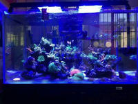 Buy Auto Dimming Control LED Aquariums Light in China on Alibaba.com