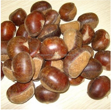 Chestnut/marron/heathy food/hot Sale Dried/without kernel