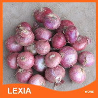 Fresh Red onion export to dubai