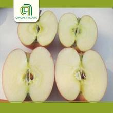 farm fruit cheap shanxi qinguan apple with high quality