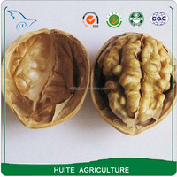 Xinjiang Aksu Thin shell Walnuts with shell