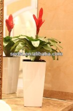natural plants,floating flower pot,garden plant