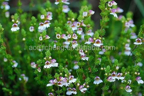 eyebright herb extract, eyebright herbal extract, eyebright herb extract powder