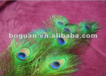 fashion big eyes peacock feather