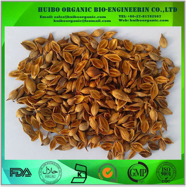 organic Forsythia extract / Weeping(Fructus) Forsythia Extract/ Forsythin phillyrin