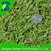 Silt grass seeds, saltwater couch seeds, swamp couch seeds