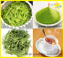 Natural Green tea extract Epicatechin(EC)/CAS: 490-46-0 /For memory and brain/Anti-fatigue/Nootropics/coluracetam/noopept/