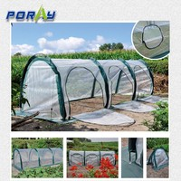 New 3m PE tunnel greenhouse for growing vegetables