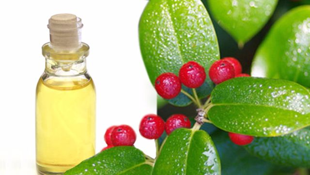 Wintergreen Extract Winter Green Oil 100% Pure Natural Therapeutic Grade India