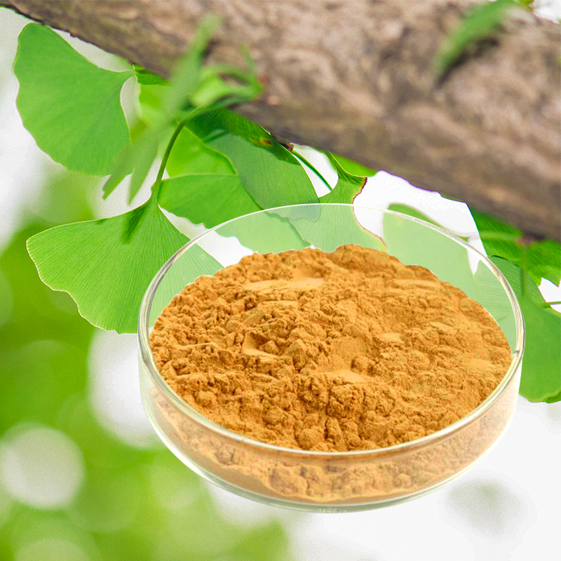 herbal medicine health food supplements ginkgo biloba powder herbs medicinal plant extract