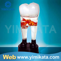 Yimikata Competitive price Long Warranty Music Tooth Fish Bowl C-154
