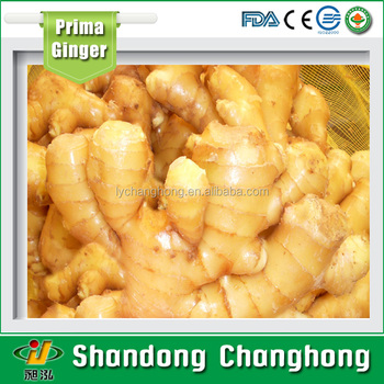 [HOT] New crop of Fresh Ginger in China