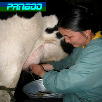 probiotics for cow/in stead of antibiotics/to promote the effect of Cow feed
