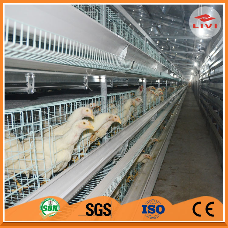 Automatic equipment of chicken breeds and egg production line