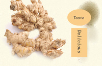 New Ginger Buyer ( High Quality)