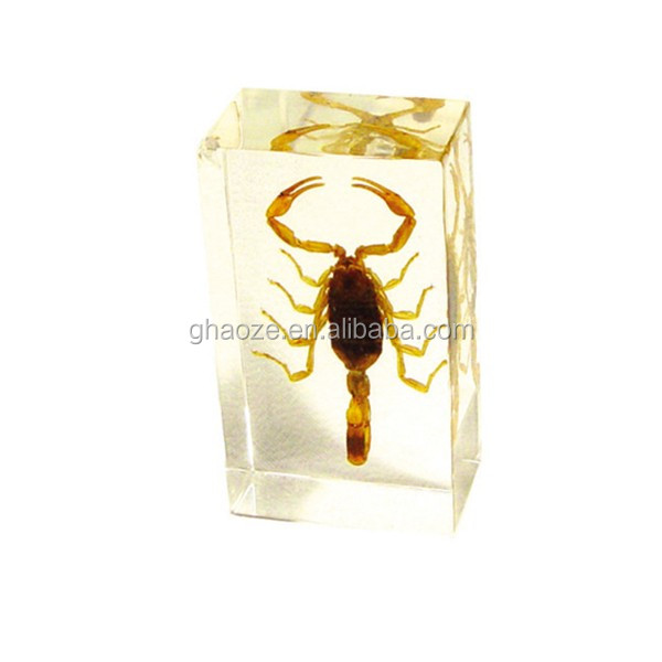 Resin Handcraft Taxidermy Paperweight Insect Toys Factory