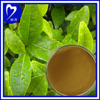 95% EGCC green tea extract with tea Polyphenols