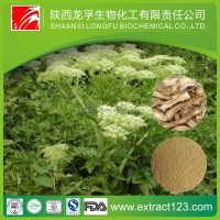 Factory Supply Angelica Root Extract