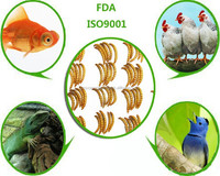 poultry feed ingredients high protein mealworms