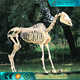 High quality museum exhibition life size horse skeleton for sale