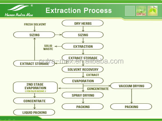 100% Pure Extract of Barley Grass P.E. 4:1 5:1 10:1 20:1