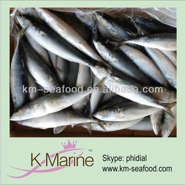 Fresh catch seafood mackerel fish in frozen